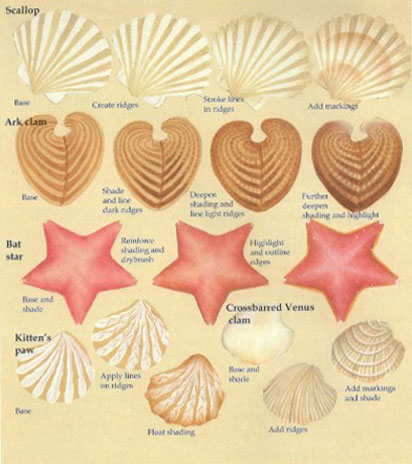 How to draw a starfish and clams.